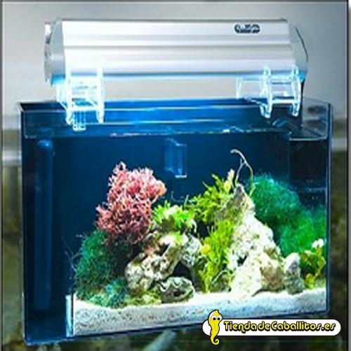 Refugio aquafuge peque o 9 litros for Acuarios pequenos