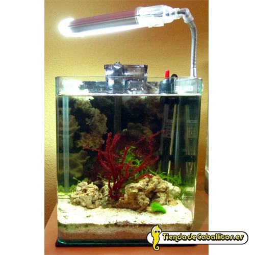 Kit acuario blau acuaristic10 litros for Acuario marino precio